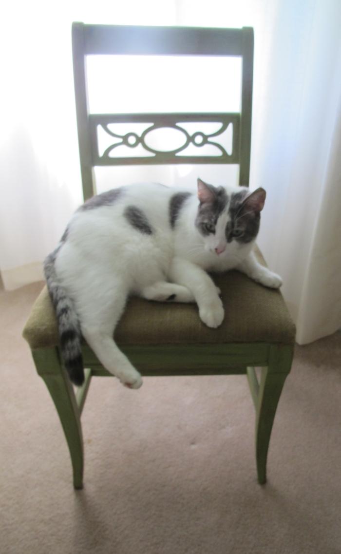 Scottie Sitting